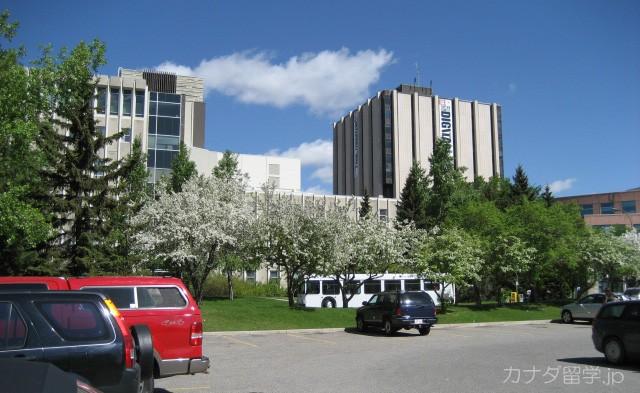 カナダ 大学